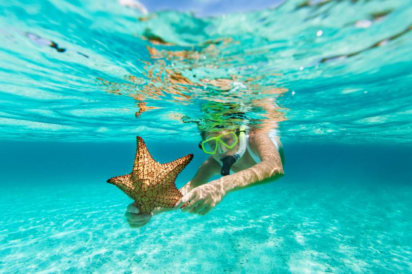young woman in white swimsuit with snorkel and mask snorkeling with an alive starfish in the Caribbean waters
