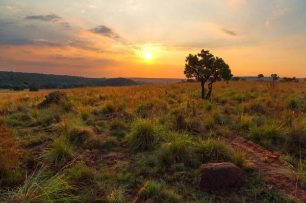 Sudafrica (HannesThirion, iStock)