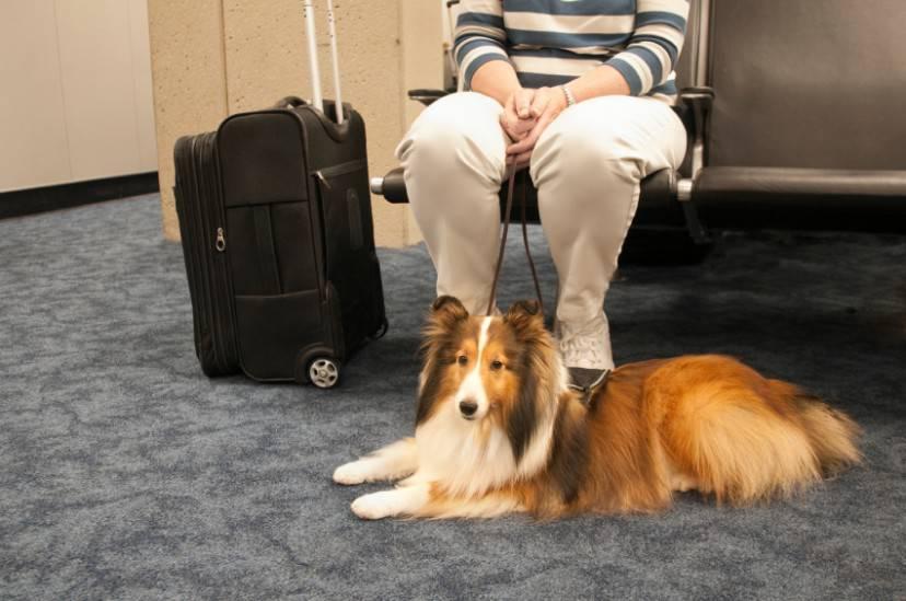 Cane in aeroporto (Loretta Hostettler iStock)