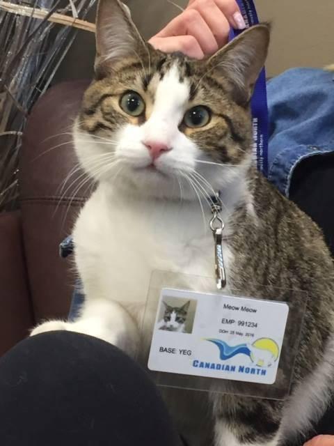 gatto adottato compagnia aerea 2