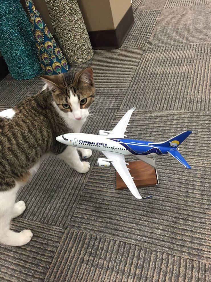 gatto adottato compagnia aerea 3