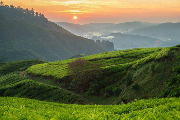 Cameron Highlands, Malesia (iSTock)