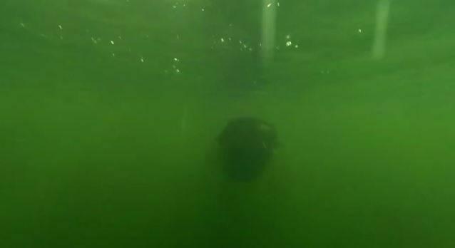 Pesce Chernobyl (Screenshot)