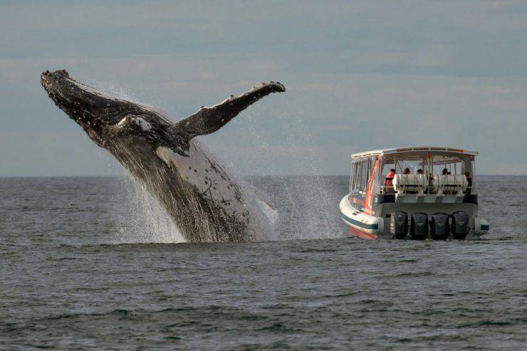 Balena, acque Sydney (Picture: Caters)