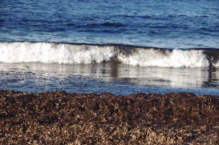 costiera coperta di alghe marine