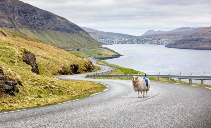Mappa di Google con le pecore (visitfaroeislands.com)