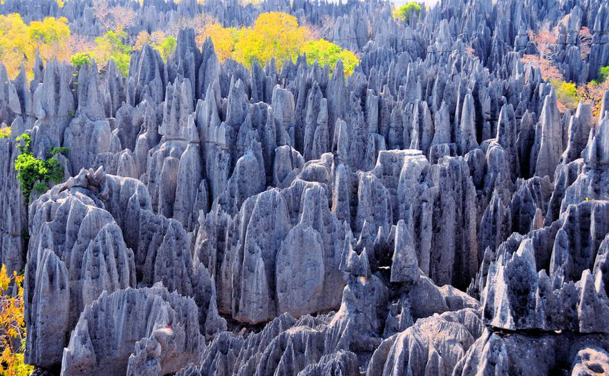 Tsingy de Bemaraha National Park, Mahajanga province, Madagascar: karst limestone formation - UNESCO World Heritage Site - photo by M.Torres