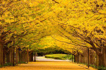 Tokyo in autunno (Sean Pavone, iStock)