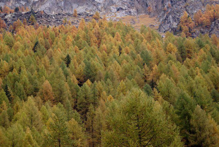 Parco Nazional del Gran Paradiso (Marco Franchino, CC BY-SA 3.0, Wikipedia)