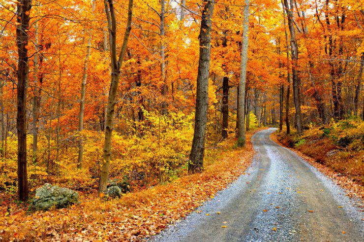 Foliage In Italia I Boschi Pi 249 Belli Dove Ammirare L Autunno