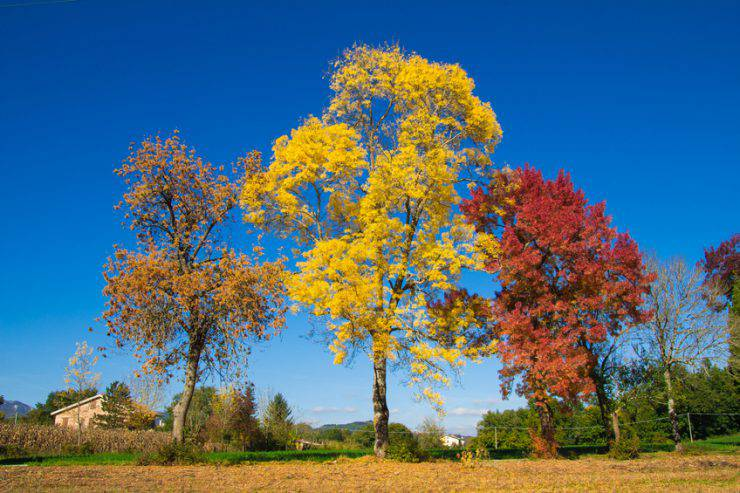 idee viaggio foliage