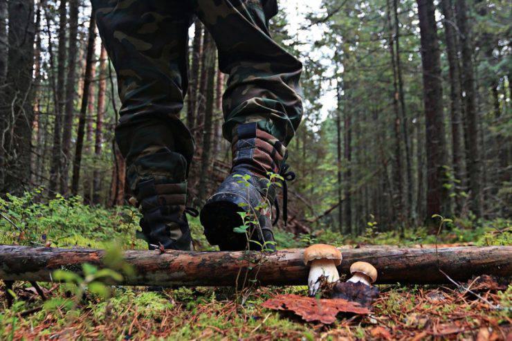 Cerca funghi nel bosco (iStock)