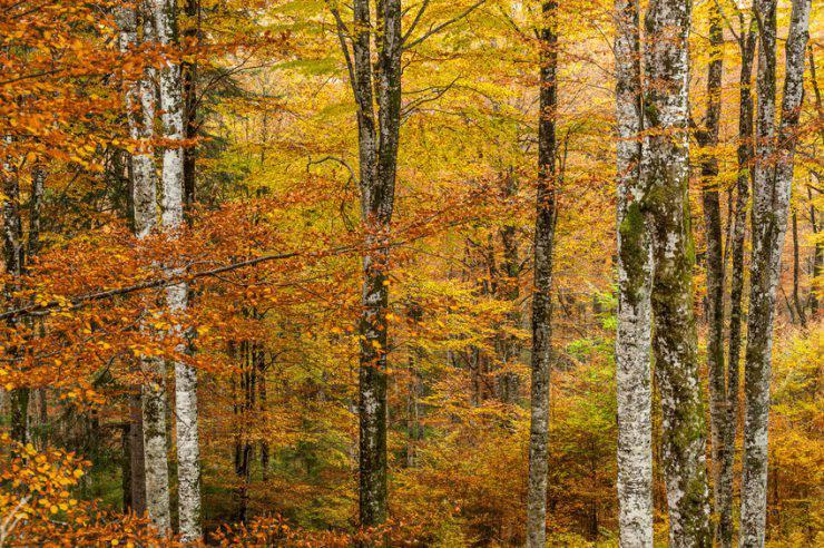 foliage in italia autunno
