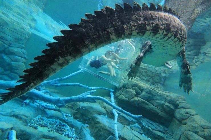 Gabbia della Morte (Crocosaurus Cove, Foto Facebook)