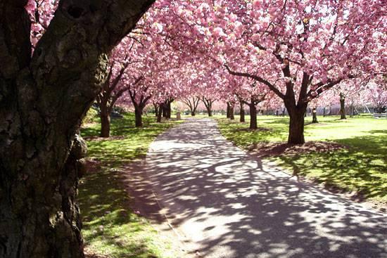 Giardino Botanico di Brooklyn (Wikicommons)