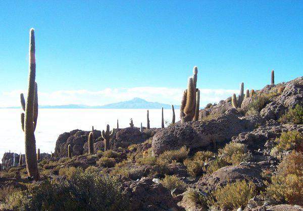 Isla del Pescado, Salar de Uyuni (Mhwater, CC BY-SA 3.0, Wikicommons)