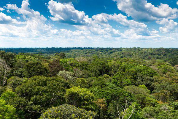 Foresta Amazzonica, Brasile (iStock)