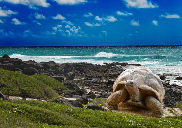 Isole Galapagos (iStock)