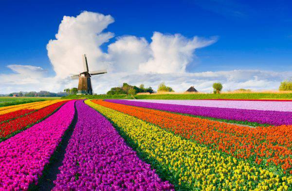 Primavera in olanda i posti dove andare e cosa vedere for Primavera immagini desktop
