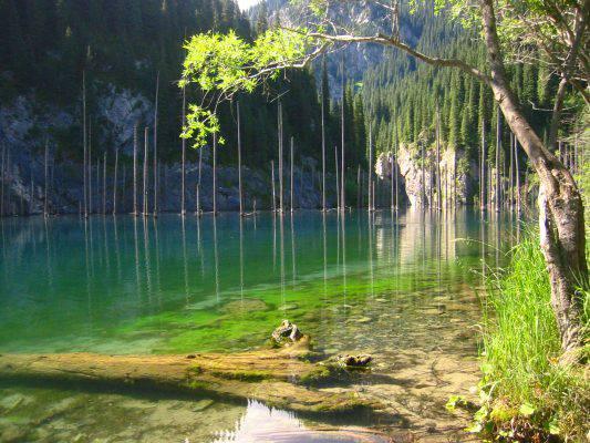 foresta nel lago
