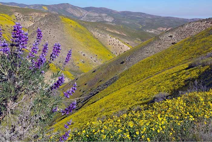 un deserto fiorito negli USA fonte desertusa.com/