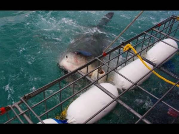 squalo fonte youtube