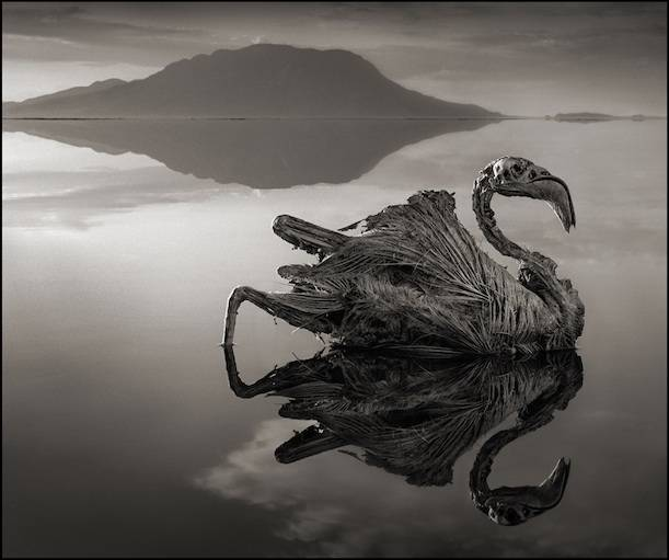 Questo lago pietrifica gli animali fonte youtube/Nick Brandt (Across the ravaged land)