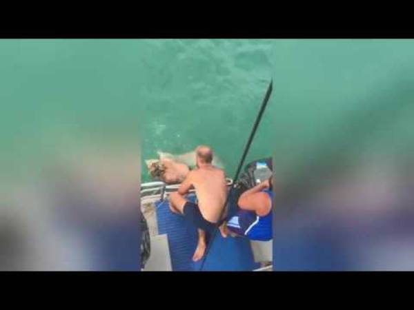 lotta a mani nude con uno squalo fonte youtube