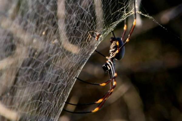 Ragni in Australia foto di Lorenzo Ceccarelli