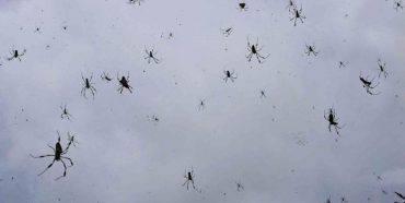 In questo paese piovono ragni fonte Goulburnnews