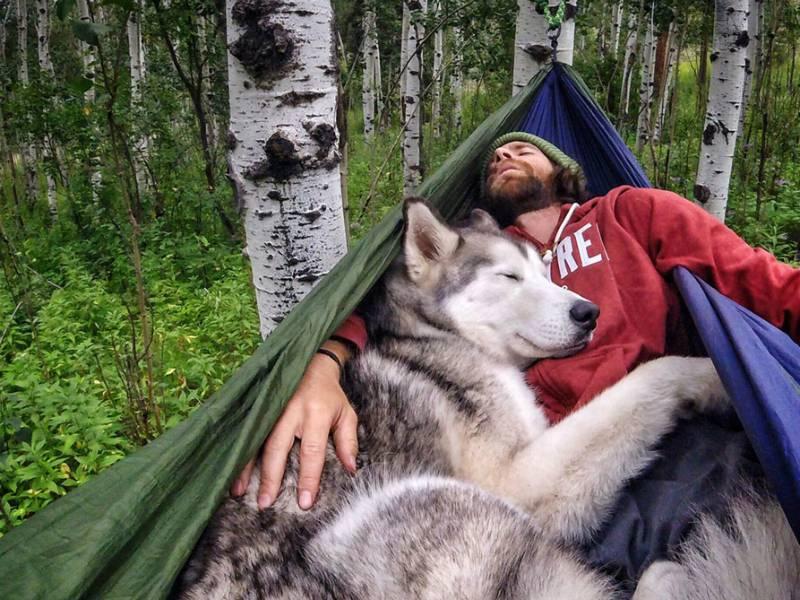 Il cane lupo Loki fonte facebook