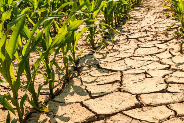 ROMA: non piove più, è allarme SICCITA'