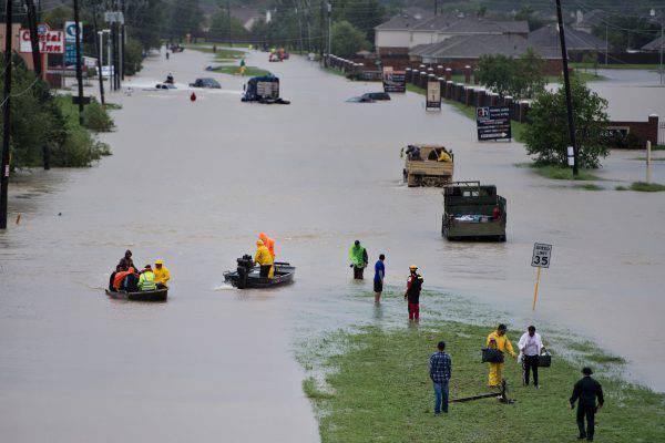 Strana creatura ritrovata in Texas dopo l'uragano