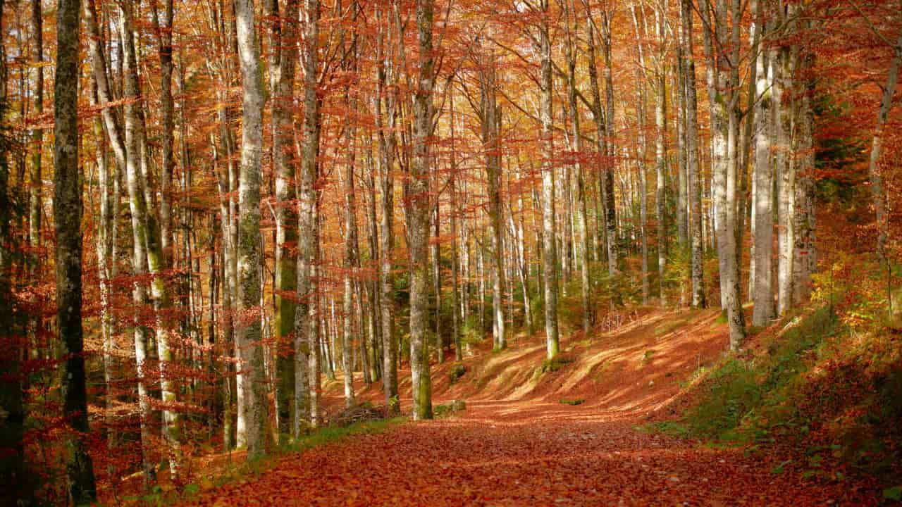 boschi italia passeggiate autunno