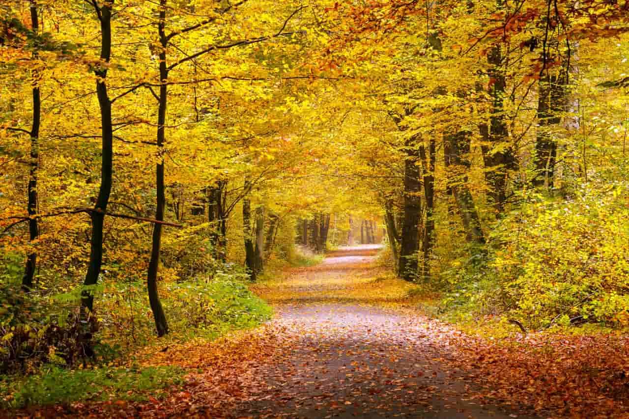 foliage europa