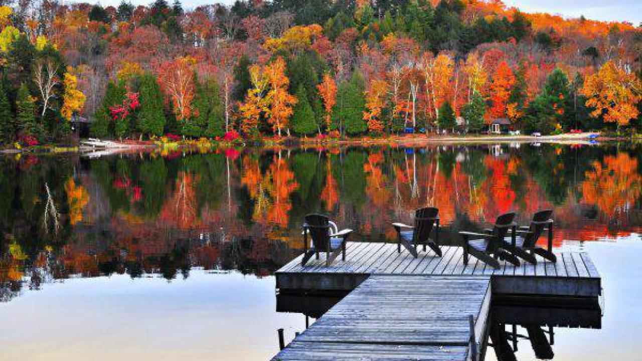 Perchè Acero Rosso Diventa Verde autunno, perchè le foglie cambiano colore e diventano rosse
