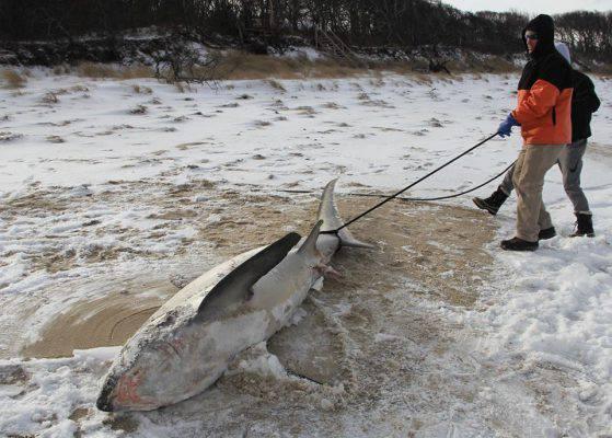 squalo-congelato