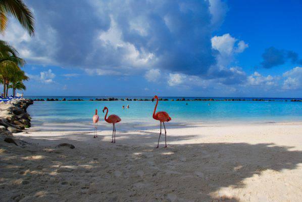 La Spiaggia Dei Fenicotteri Rosa Per Un Bagno Speciale Foto