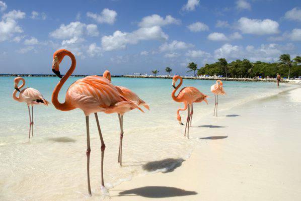 spiaggia dei fenicotteri rosa