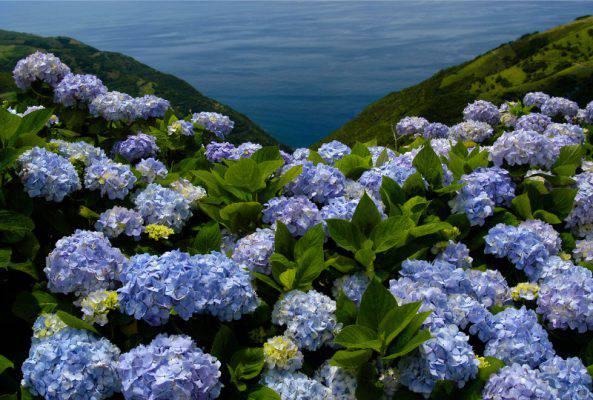 Fioriture Di Primavera Da Vedere In Europa Le Più Belle