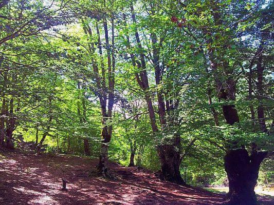 idee primo maggio 2018 al bosco