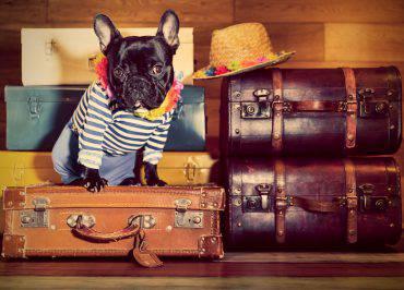 campeggi-pet-friendly-estate-2018-classifica