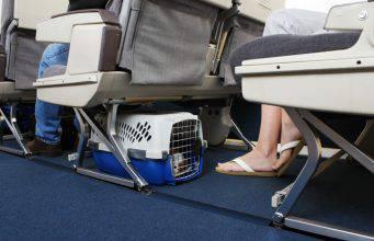 cani in aereo