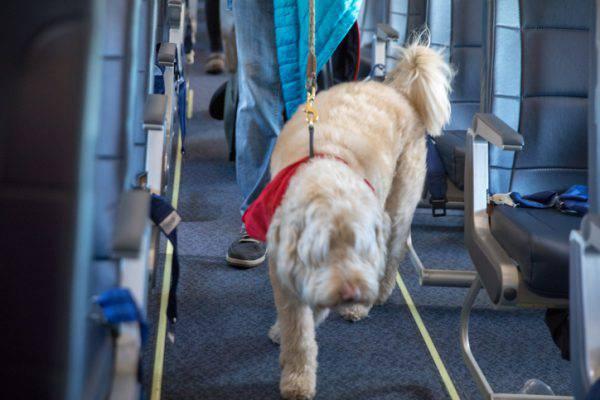 cane aereo