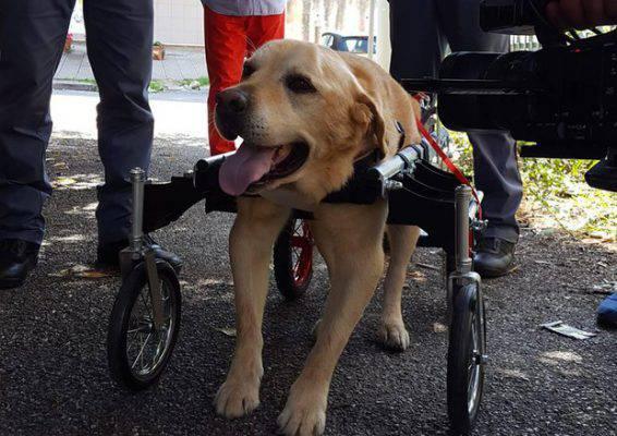 Vibo: è morto Dylan, il cane col carrellino che aveva commosso l'Italia
