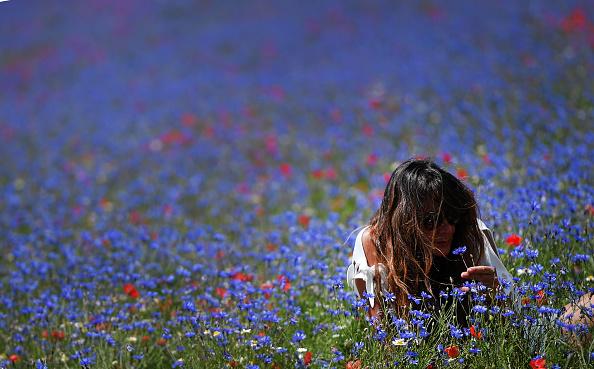 fioritura di castelluccio