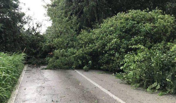 Pioggia, raffiche di vento e grandine: disastro in Veneto e in tutto il Nord