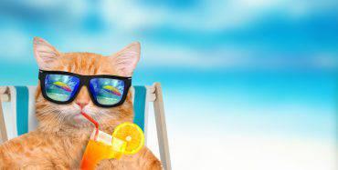 viaggiare-gatto-regole-aereo