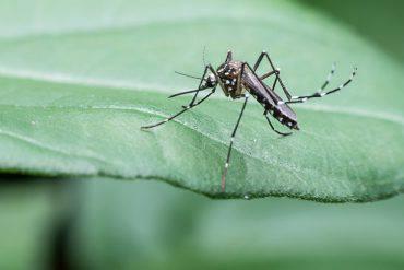 zanzare-rimedi-efficaci-naturali-fai-da-te