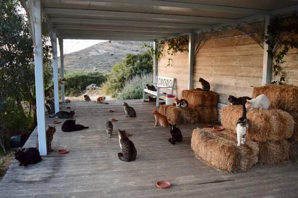 cercasi amante dei gatti